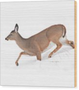 Doe In Deep Snow Wood Print