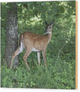 Doe In The Forest Wood Print