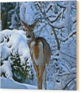 Doe In The Snow In Spokane 2 Wood Print