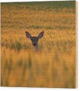 Doe In The Wheat Wood Print
