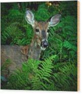 Doe In The Woods Wood Print
