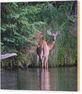Doe In Water Wood Print