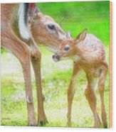 Doe Nuzzles Her Fawn Wood Print