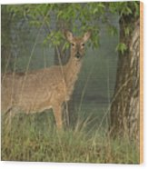 Doe On A Foggy Morning In Wyoming Wood Print