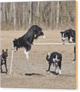 Dog 380 Wood Print