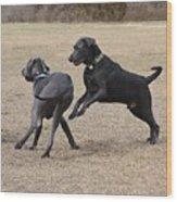 Dog 382 Wood Print