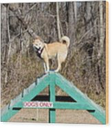 Dog 389 Wood Print