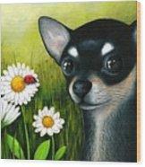 Dog 79 Chihuahua Wood Print
