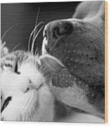 Dog And Cat  Wood Print
