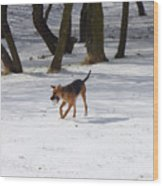 Dog And Winter Wood Print
