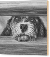 Dog At Gate Wood Print