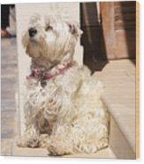 Dog Begging Wood Print