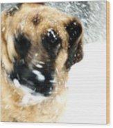 Dog Blizzard - German Shepherd Wood Print