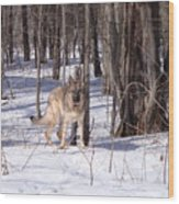 Dog Breed German Shepherd Wood Print