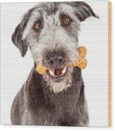 Dog Carrying Bone Biscuit In Mouth Wood Print