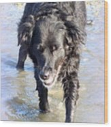 When The Dog Can Finally Cool Down Her Feet She Obviously Enjoys It  Wood Print