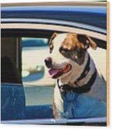 Dog In Car Wood Print
