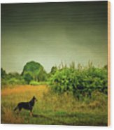 Dog In Chesire England Landscape Wood Print