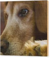 Dog In Thought  Wood Print