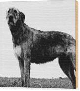Dog: Irish Wolfhound Wood Print