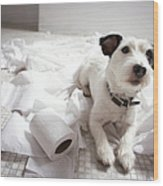 Dog Lying On Bathroom Floor Amongst Shredded Lavatory Paper Wood Print