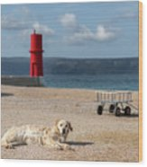 Dog Lying On The Beach In Front Of Red Lighthouse Of Cres Wood Print