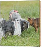 Dog Meeting  Wood Print