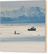 Dog Musher At Cook Inlet - Alaska Wood Print