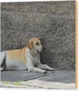Dog Next To A Wall Wood Print