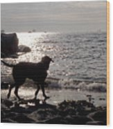 Dog On Beach Wc 2 Wood Print