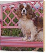 Dog On Pink Bench Wood Print