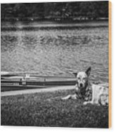 Dog On The Lake #2 Wood Print