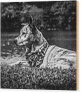 Dog On The Lake Wood Print