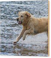 Dog Running On Shallow Lake Shore Wood Print