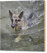 Dog Swimming In Cold Water Wood Print