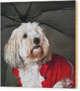Dog Under Umbrella Wood Print by Elena Elisseeva