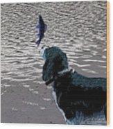Dog Vs Perch 3 Wood Print