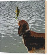 Dog Vs Perch 4 Wood Print