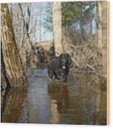 Dog Wading In Swollen River Wood Print