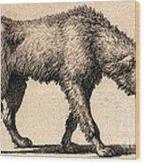 Dog With Rabies, Engraving, 1800 Wood Print