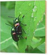 Dogbane Beetles Wood Print