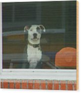 Doggie In The Window Wood Print