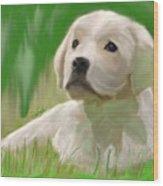 Doggie Seems Sad Wood Print
