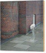 Doggie  Strolling 2 Wood Print