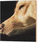 Doggy Dreams Wood Print