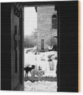 Dogs At The Grave Of Vlad Tepes Wood Print