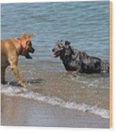 Dogs In Lake Michigan Wood Print