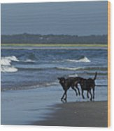 Dogs On The Beach Wood Print