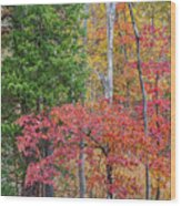 Dogwood And Cedar Wood Print