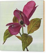 Dogwood Ballet 1 Wood Print